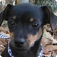 Adopt A Pet :: Tazzle - Cedartown, GA