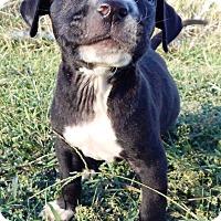 Adopt A Pet :: Kitty - Terrell, TX