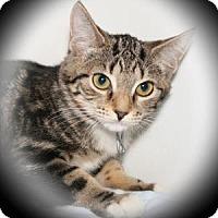 Adopt A Pet :: Coral - Bradenton, FL