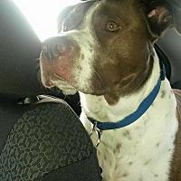 Adopt A Pet :: Taz - Bartlett, TN
