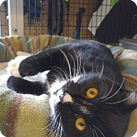 Adopt A Pet :: Tux - Bryson City, NC