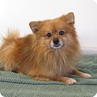 Adopt A Pet :: Edward - Alstead, NH