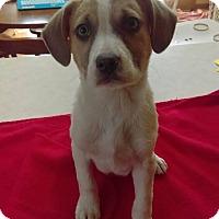 Adopt A Pet :: Romeo - joliet, IL