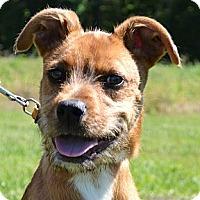 Adopt A Pet :: *Gus - PENDING - Westport, CT