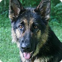 Adopt A Pet :: Maverick - Nashville, TN