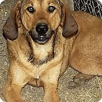 Adopt A Pet :: Kendra - Savannah, MO