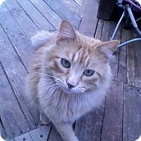 Adopt A Pet :: Frank - Calimesa, CA