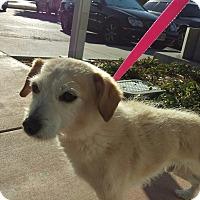 Adopt A Pet :: Spencer - San Francisco, CA