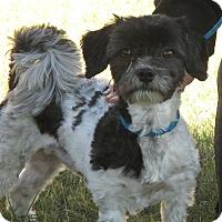 Adopt A Pet :: Charlie - Turlock, CA