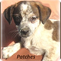 Adopt A Pet :: Patches-Adoption Pending - Marlborough, MA