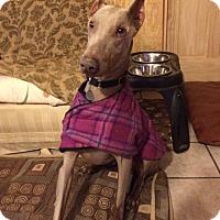 Adopt A Pet :: Lucas - New Richmond, OH
