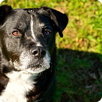Adopt A Pet :: Oreo - Gallatin, TN