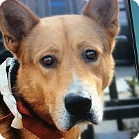 Adopt A Pet :: MASON VON MASBURG - Los Angeles, CA