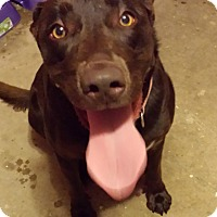 Adopt A Pet :: Emme - Huntsville, AL