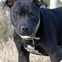 Adopt A Pet :: Lucky - Patterson, CA