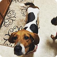 Adopt A Pet :: Eloise - Charelston, SC