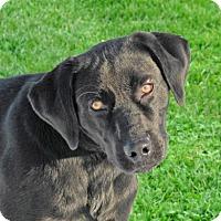 Adopt A Pet :: Warrick - Woodstock, IL