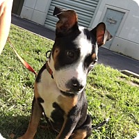 Adopt A Pet :: Delaney - Jupiter, FL