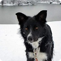 Adopt A Pet :: Jacob (Courtesy Listing  from Georgetown, KY) - Highland, IL