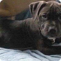 Adopt A Pet :: Cameron - Framingham, MA