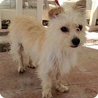 Adopt A Pet :: Oakley (BH) - Santa Ana, CA