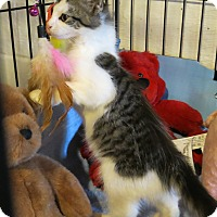 Adopt A Pet :: Alabama - Geneseo, IL