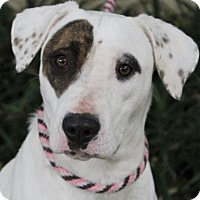 Adopt A Pet :: BELLA - Red Bluff, CA