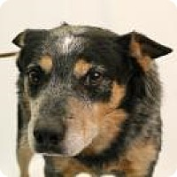 Adopt A Pet :: Dude - Huachuca City, AZ