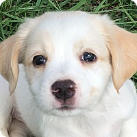 Adopt A Pet :: Stormy - Pennigton, NJ