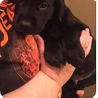 Adopt A Pet :: Beaux - DeForest, WI