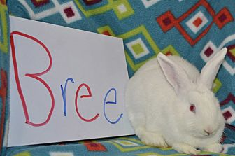 American for adoption in Erie, Pennsylvania - Bree