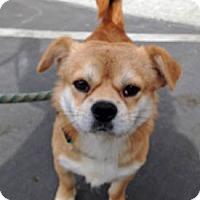 Adopt A Pet :: Henery - Ventura, CA