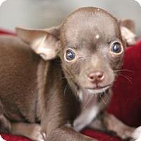 Adopt A Pet :: Chestnut - Phoenix, AZ