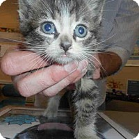 Adopt A Pet :: LEROY JENKINS - Louisville, KY