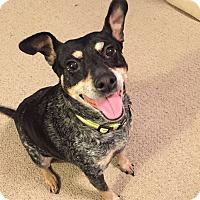 Adopt A Pet :: Maggie H - Nashville, TN
