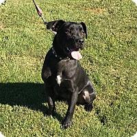 Adopt A Pet :: Jack - Maybrook, NY