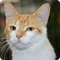 Adopt A Pet :: Morton (Morty) - Harrisburg, NC