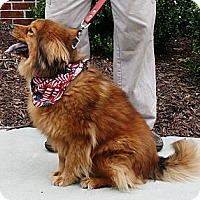 Adopt A Pet :: Josie - Sneads Ferry, NC