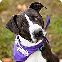 Adopt A Pet :: Hank - Reisterstown, MD