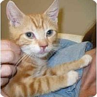 Adopt A Pet :: Techno - Colmar, PA