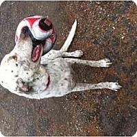 Adopt A Pet :: Sirius - Scottsdale, AZ