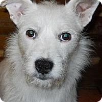 Adopt A Pet :: Willow - dewey, AZ