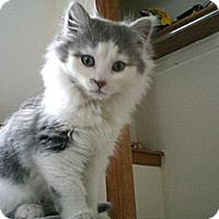 Adopt A Pet :: Noelle - Byron Center, MI
