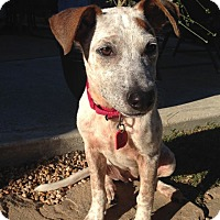 Adopt A Pet :: Sienna - Houston, TX