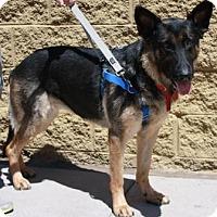 Adopt A Pet :: Rinni - Gilbert, AZ