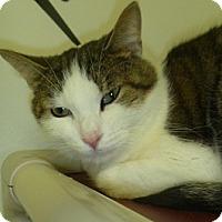 Adopt A Pet :: Andie - Hamburg, NY