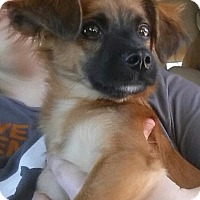 Adopt A Pet :: Prince Corbin - Gainesville, FL