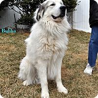 Adopt A Pet :: Bubba - Indian Trail, NC