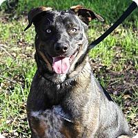 Adopt A Pet :: Goose - Winters, CA
