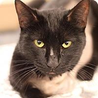 Adopt A Pet :: Emmy - Sacramento, CA